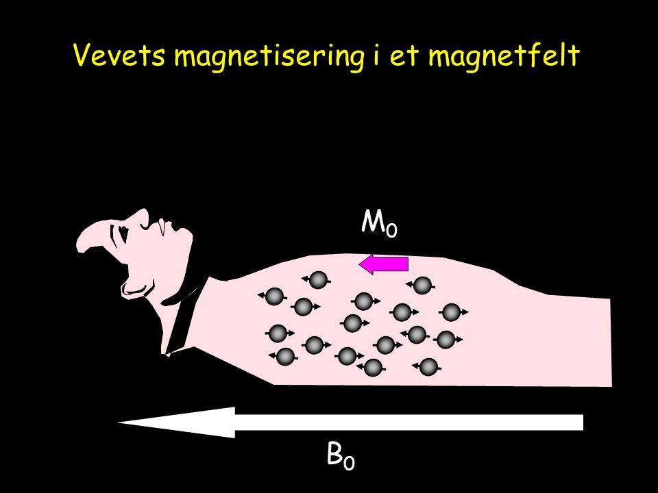 Vevets magnetisering i et magnetfelt