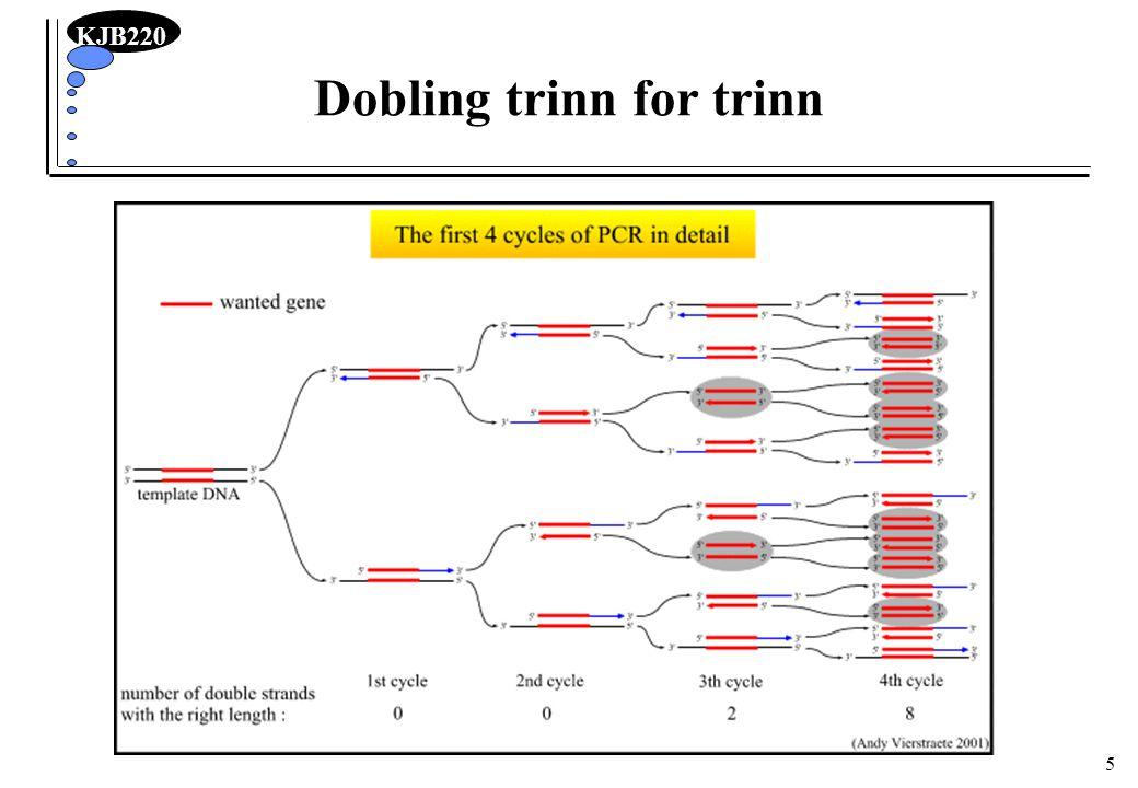 Dobling trinn for trinn