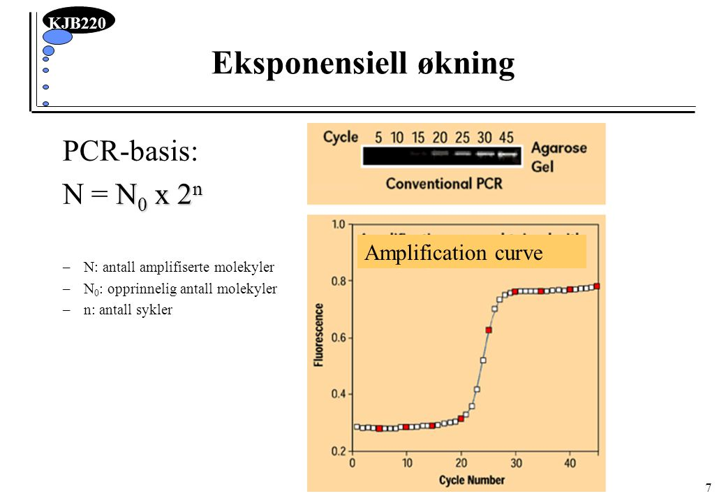 Eksponensiell økning PCR-basis: N = N0 x 2n Amplification curve