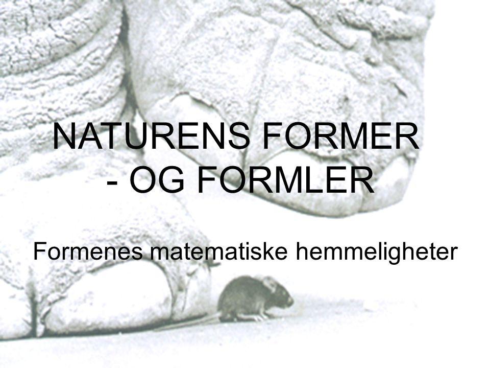 Naturens former – og formler