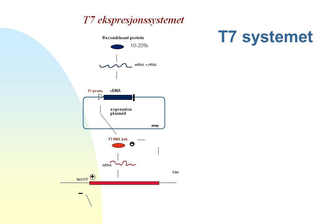 T7 systemet