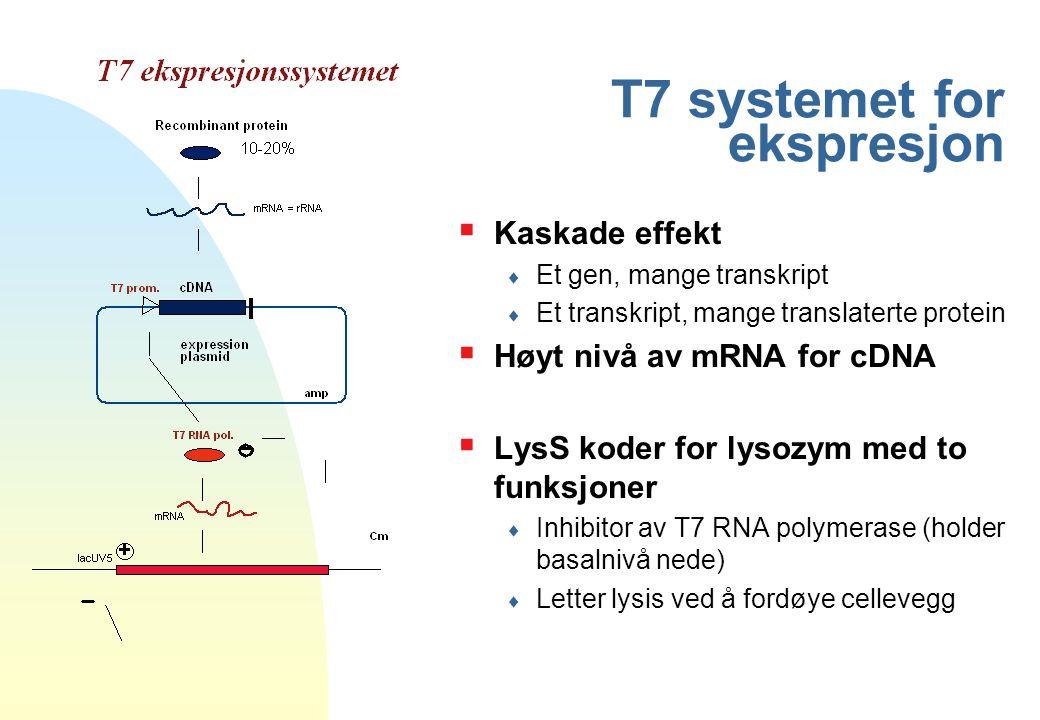T7 systemet for ekspresjon