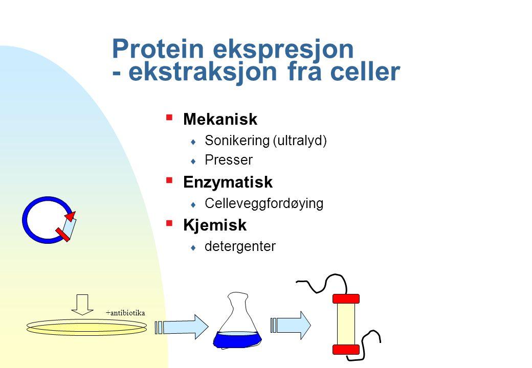 Protein ekspresjon - ekstraksjon fra celler