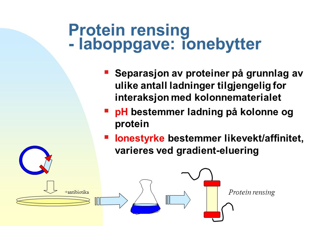 Protein rensing - laboppgave: ionebytter