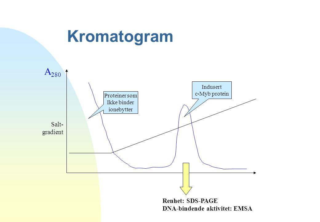 Kromatogram A280 Salt- gradient Renhet: SDS-PAGE