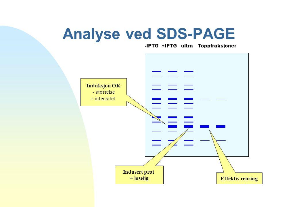 Analyse ved SDS-PAGE Induksjon OK - størrelse - intensitet