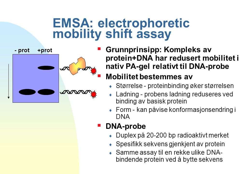 EMSA: electrophoretic mobility shift assay