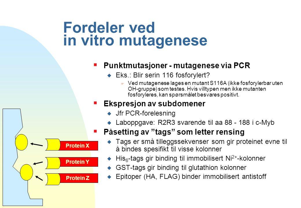 Fordeler ved in vitro mutagenese