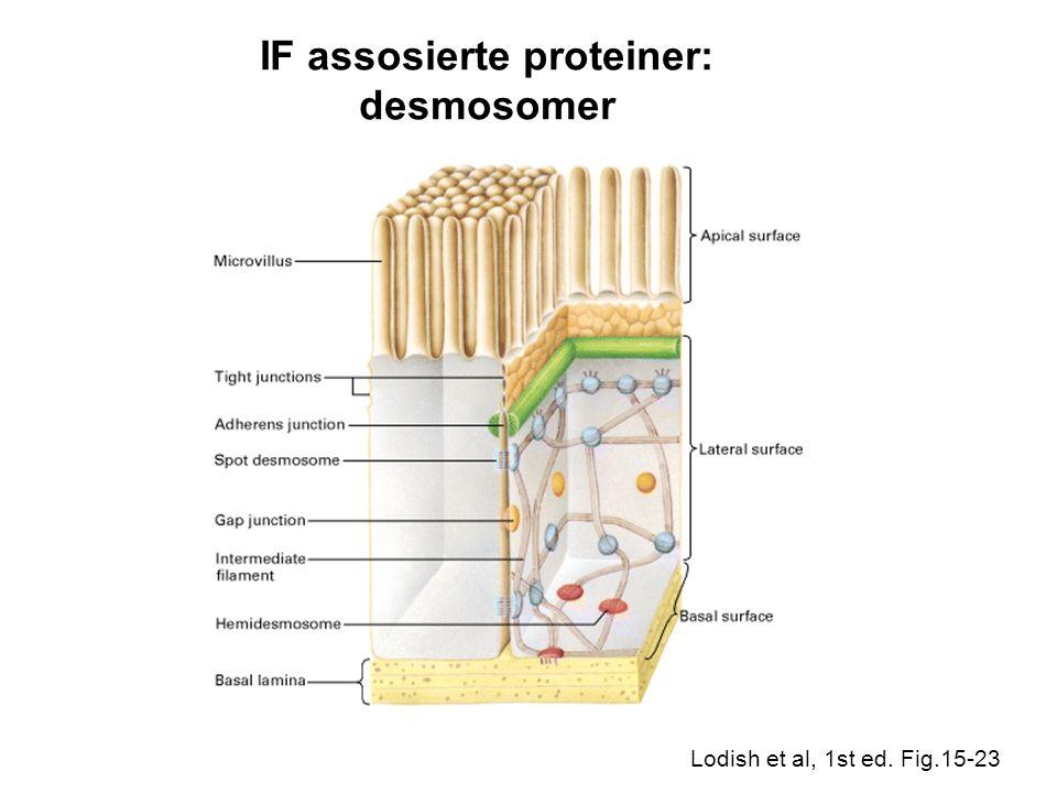 IF assosierte proteiner: desmosomer