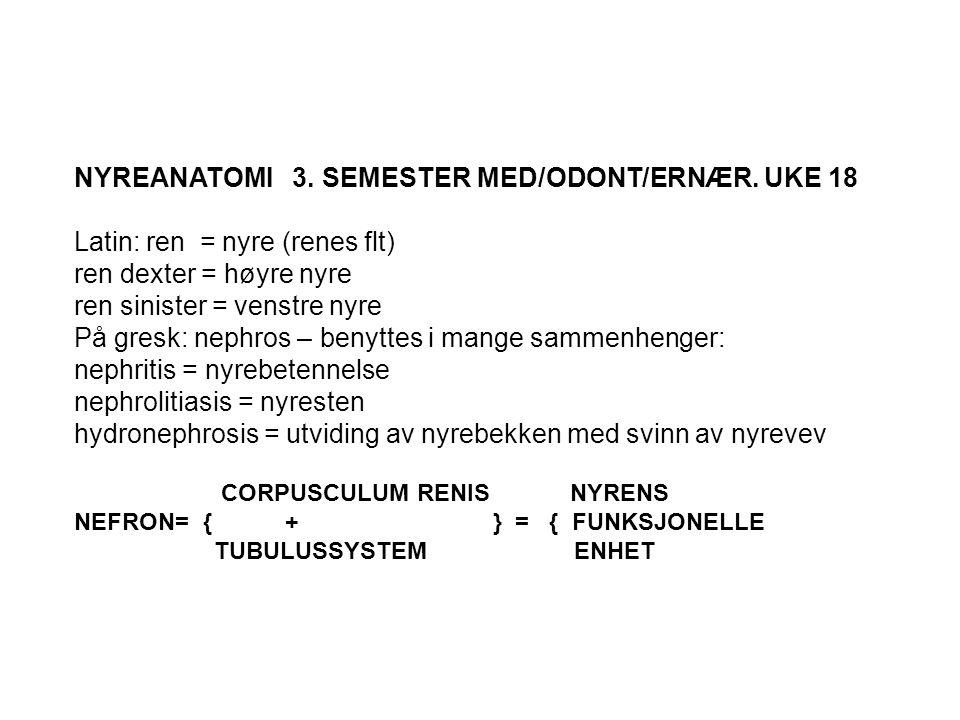 NYREANATOMI 3. SEMESTER MED/ODONT/ERNÆR. UKE 18