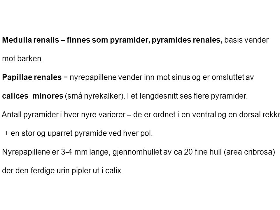 Medulla renalis – finnes som pyramider, pyramides renales, basis vender