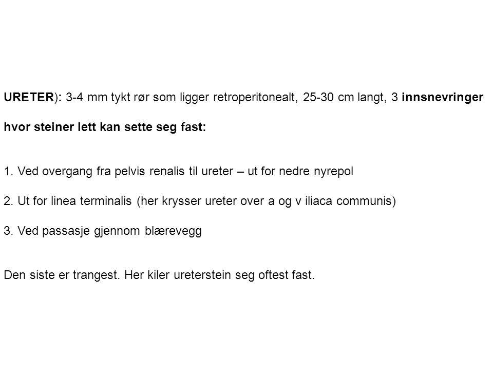 URETER): 3-4 mm tykt rør som ligger retroperitonealt, 25-30 cm langt, 3 innsnevringer