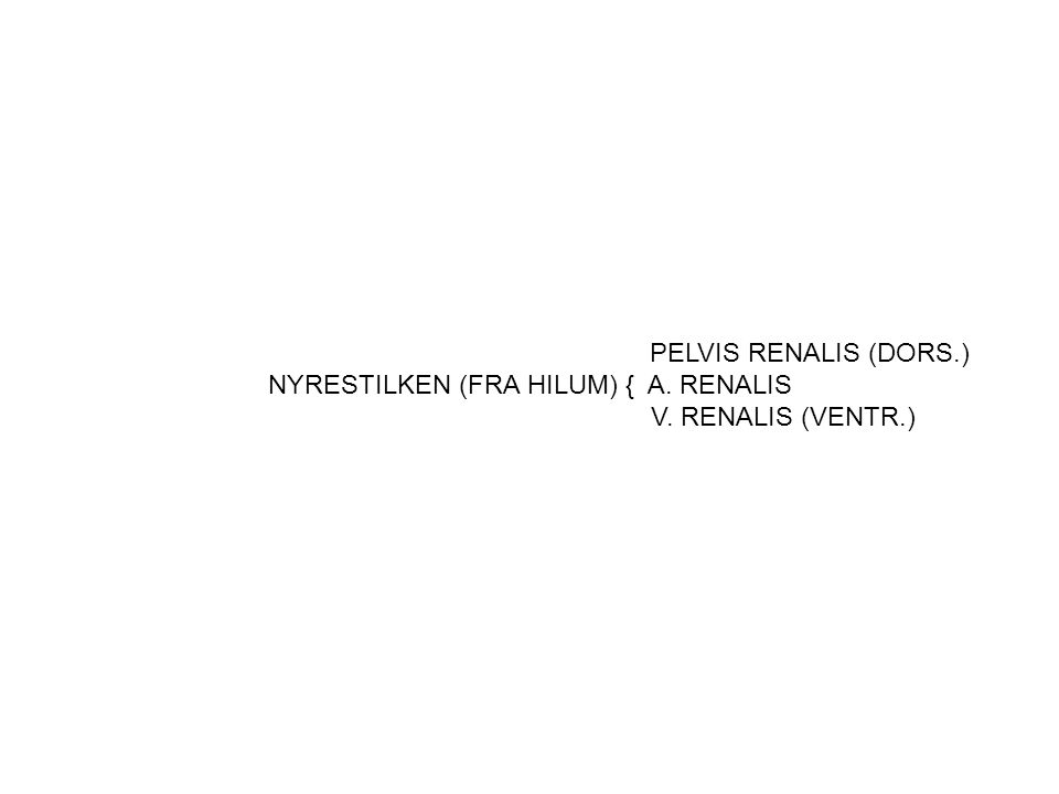 NYRESTILKEN (FRA HILUM) { A. RENALIS
