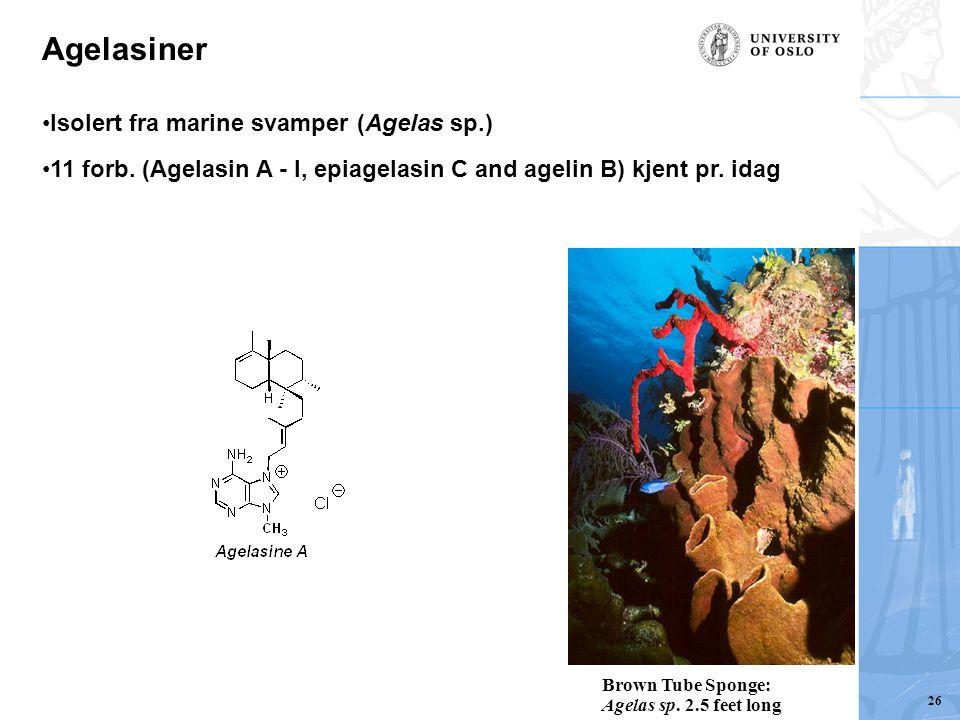 Agelasiner Isolert fra marine svamper (Agelas sp.)