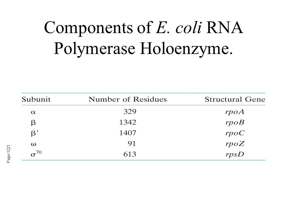 Components of E. coli RNA Polymerase Holoenzyme.
