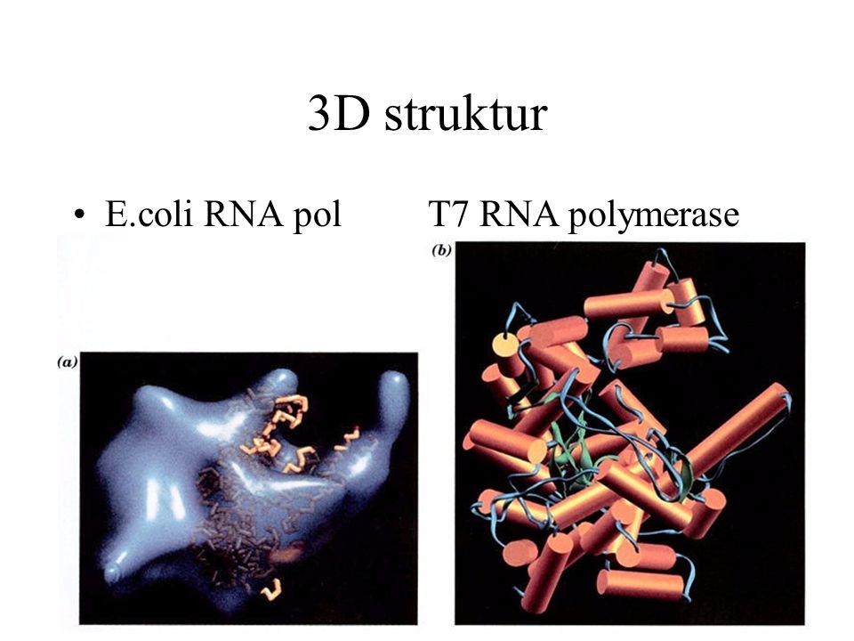 3D struktur E.coli RNA pol T7 RNA polymerase