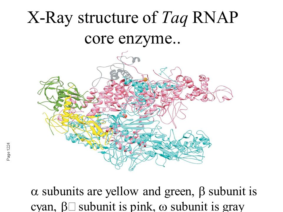X-Ray structure of Taq RNAP core enzyme..