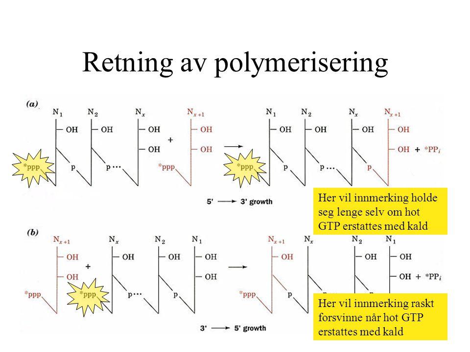 Retning av polymerisering