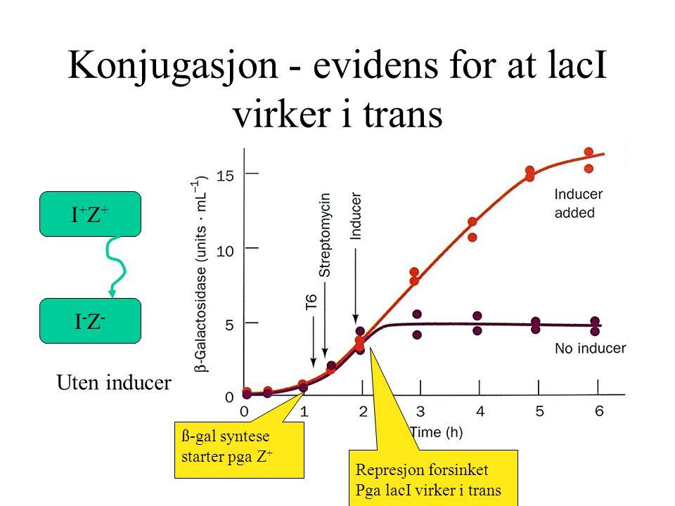 Konjugasjon - evidens for at lacI virker i trans