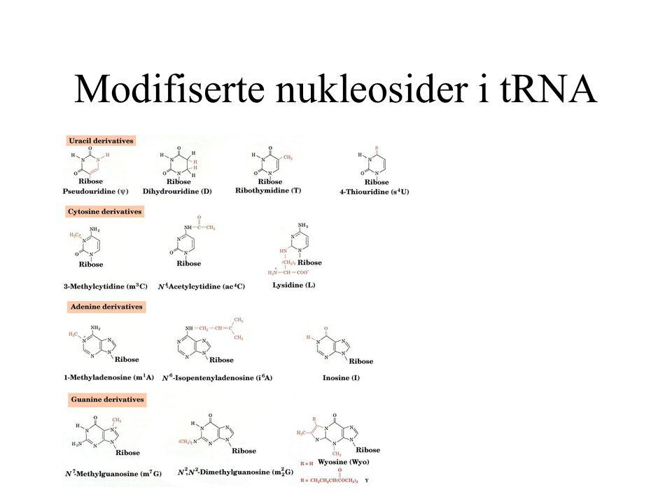 Modifiserte nukleosider i tRNA