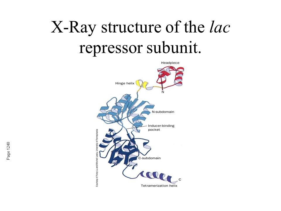 X-Ray structure of the lac repressor subunit.