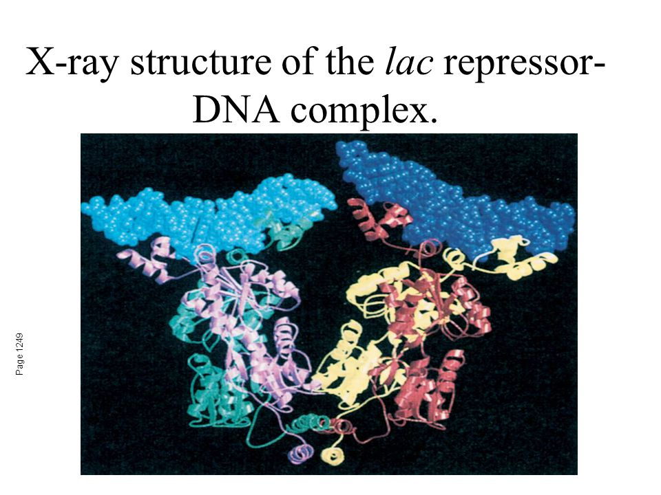 X-ray structure of the lac repressor-DNA complex.
