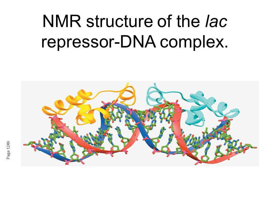 NMR structure of the lac repressor-DNA complex.