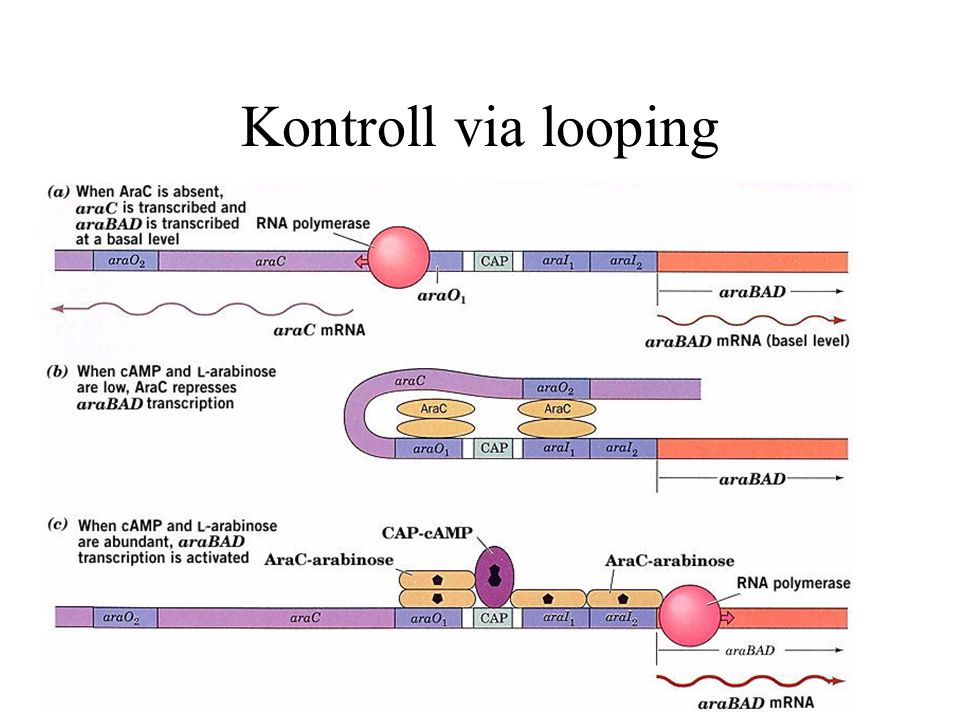 Kontroll via looping