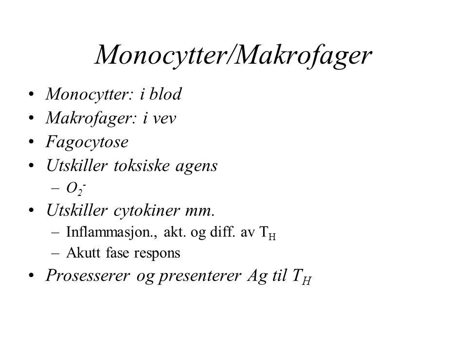Monocytter/Makrofager
