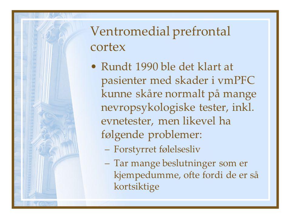 Ventromedial prefrontal cortex