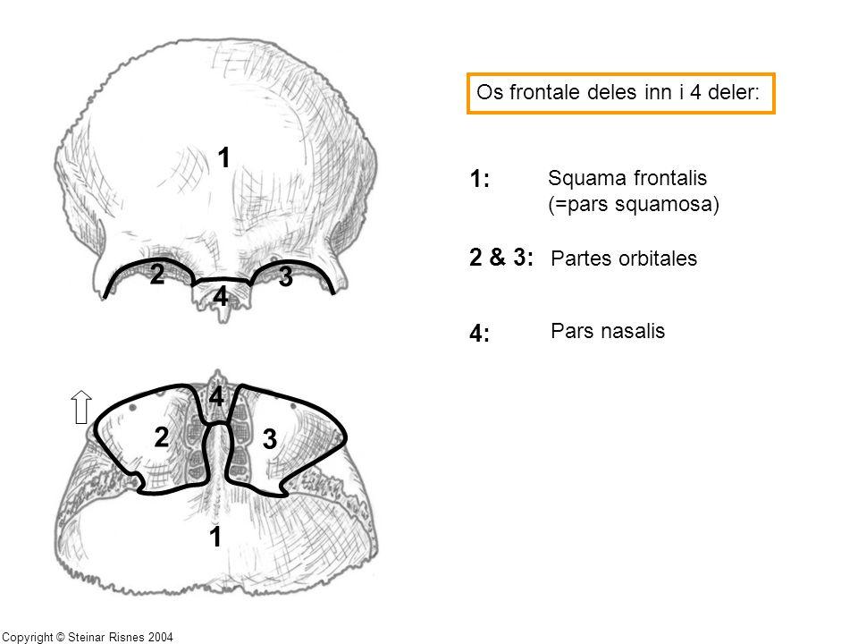1 2 3 4 4 2 3 1 1: 2 & 3: 4: Os frontale deles inn i 4 deler:
