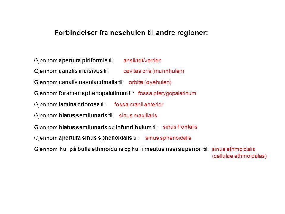 Forbindelser fra nesehulen til andre regioner: