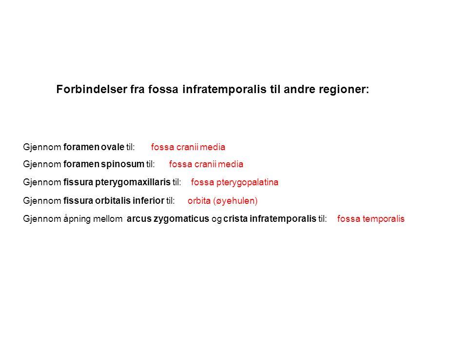 Forbindelser fra fossa infratemporalis til andre regioner: