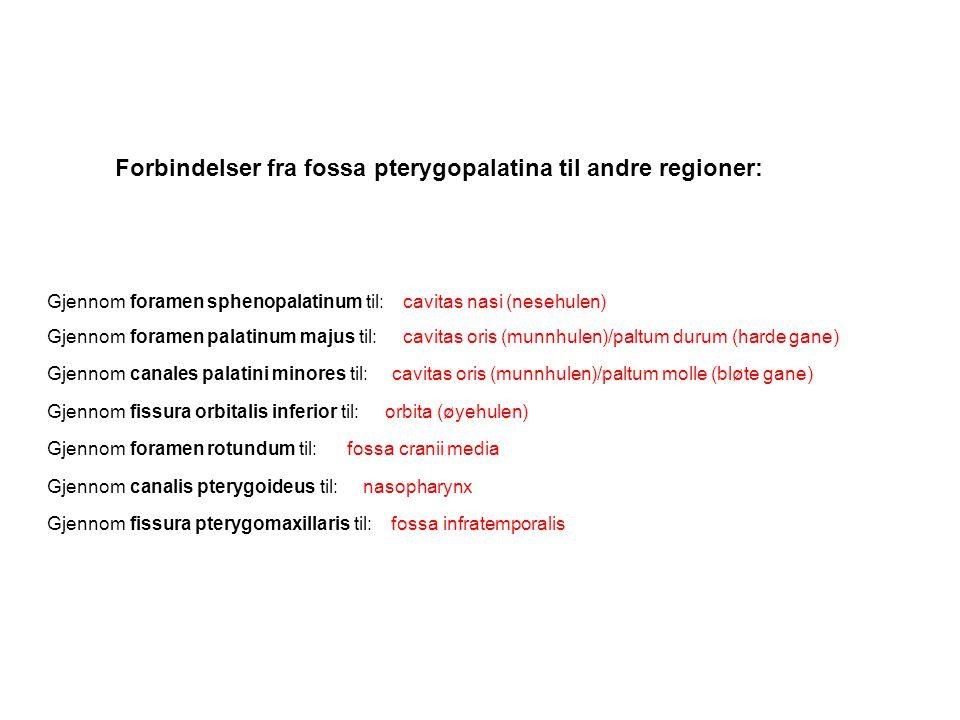 Forbindelser fra fossa pterygopalatina til andre regioner: