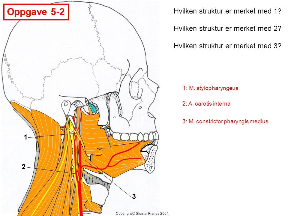 Oppgave 5-2 Hvilken struktur er merket med 1