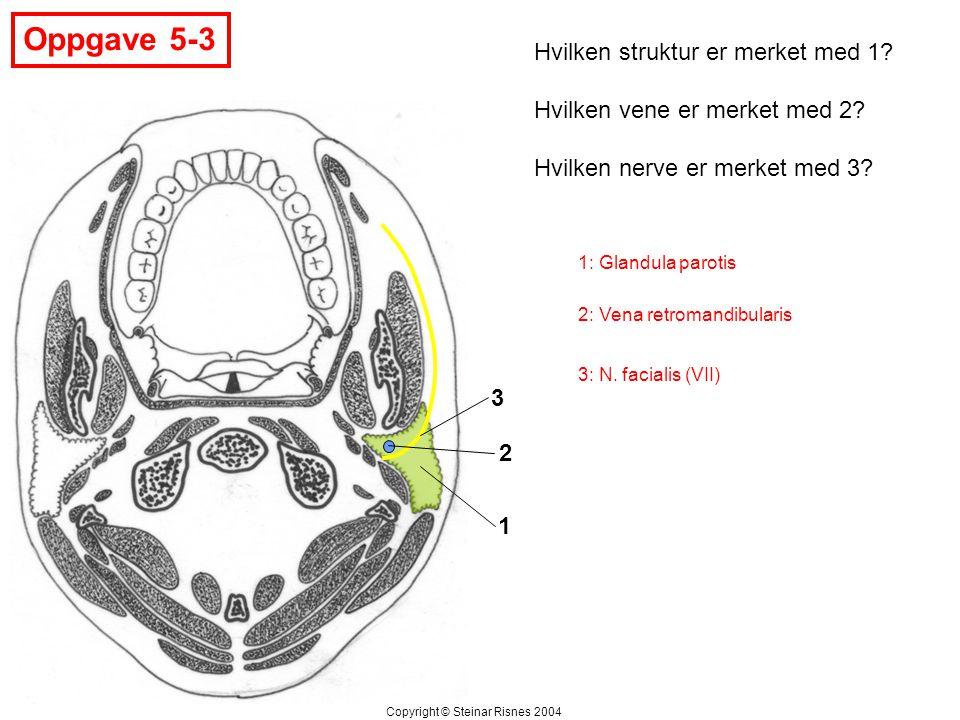 Oppgave 5-3 Hvilken struktur er merket med 1