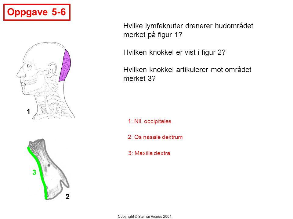 Oppgave 5-6 Hvilke lymfeknuter drenerer hudområdet merket på figur 1