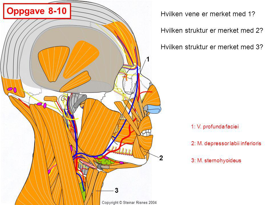Oppgave 8-10 Hvilken vene er merket med 1