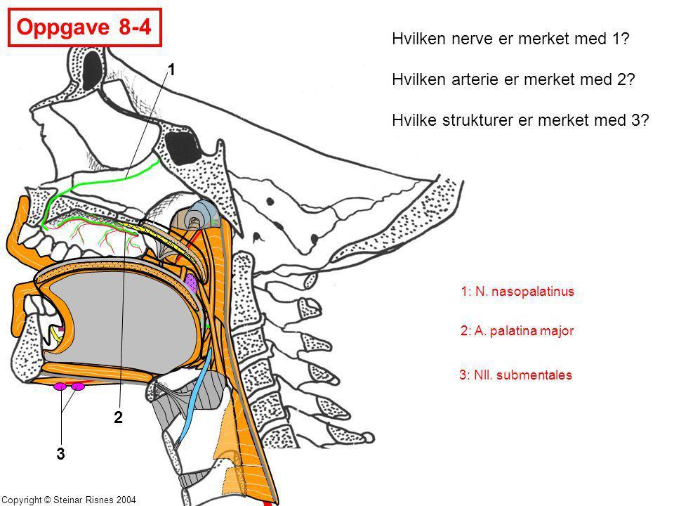 Oppgave 8-4 Hvilken nerve er merket med 1