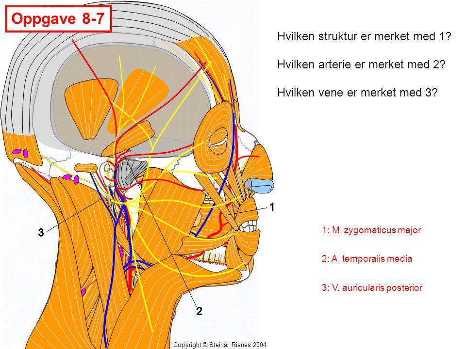 Oppgave 8-7 Hvilken struktur er merket med 1