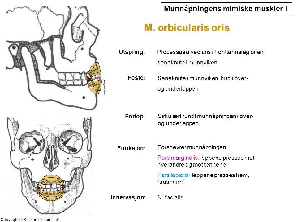 Processus alveolaris i fronttannsregionen,