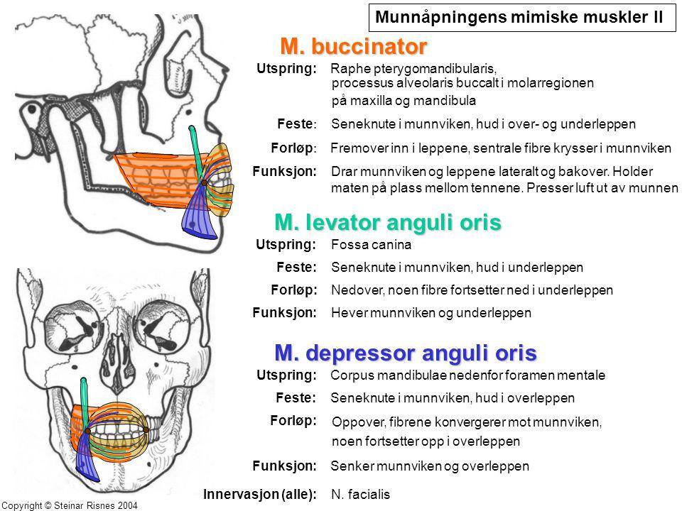 M. depressor anguli oris