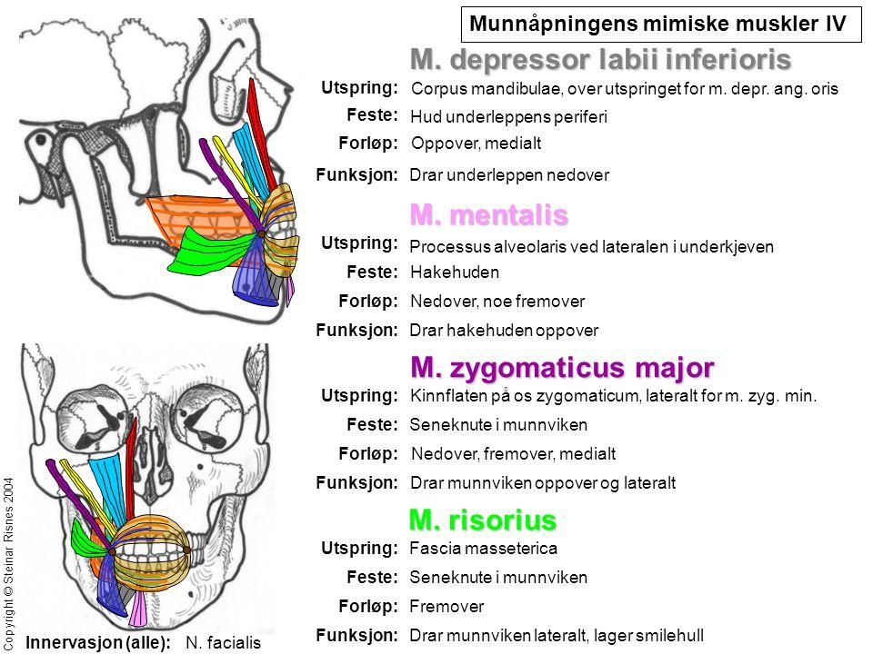M. depressor labii inferioris