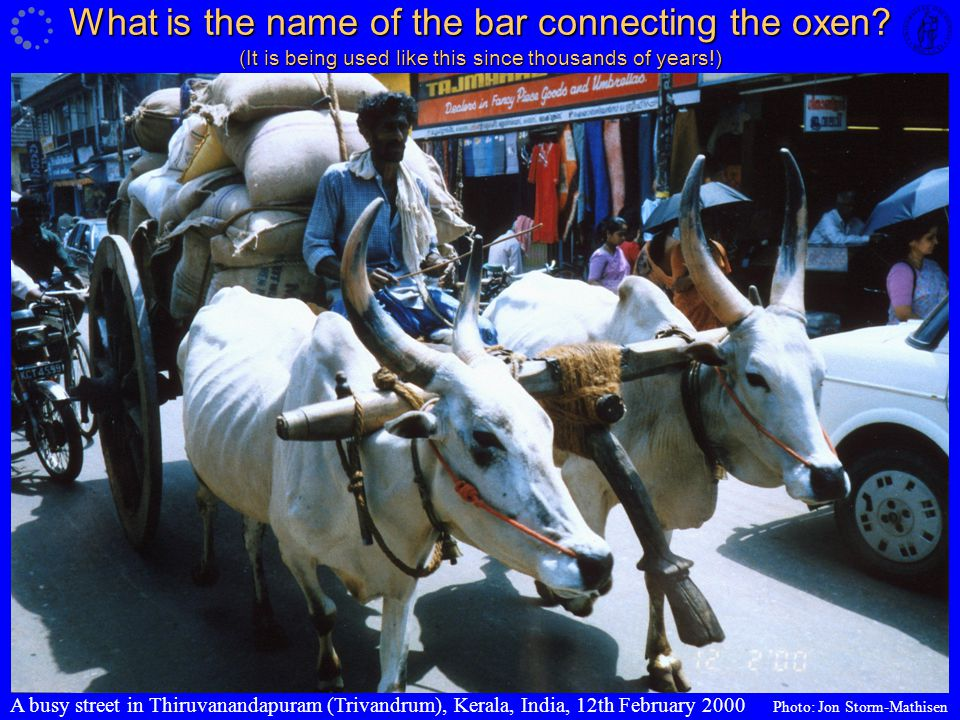 What is the name of the bar connecting the oxen
