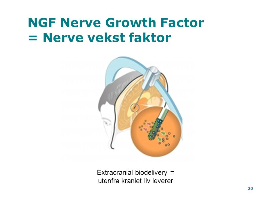 NGF Nerve Growth Factor = Nerve vekst faktor
