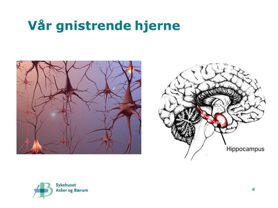 Vår gnistrende hjerne