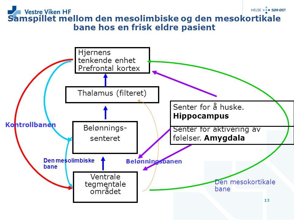 Samspillet mellom den mesolimbiske og den mesokortikale bane hos en frisk eldre pasient