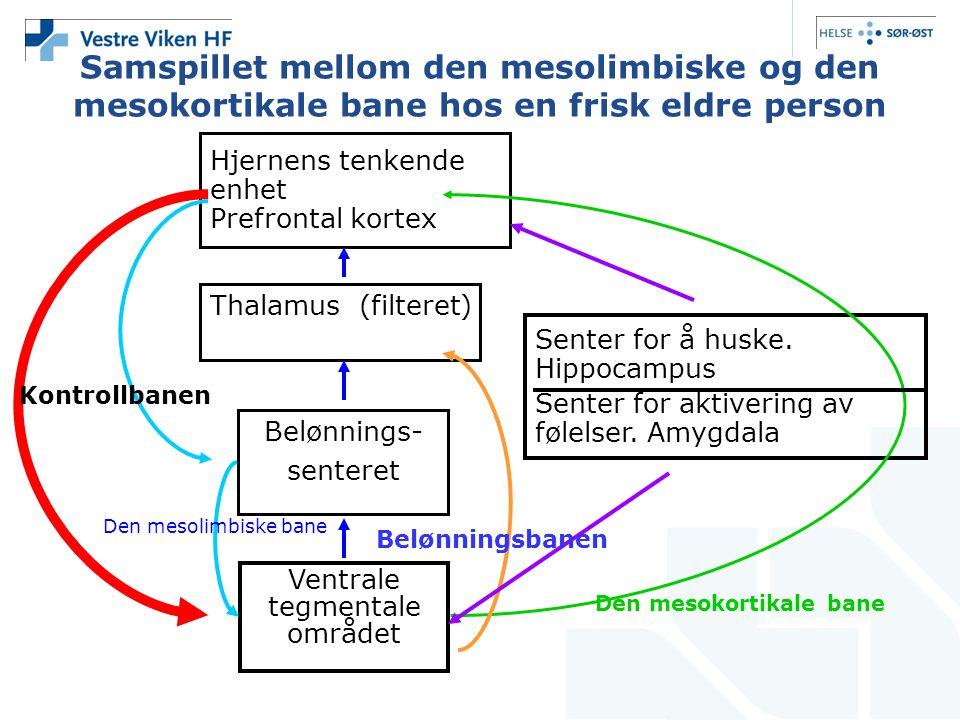 Samspillet mellom den mesolimbiske og den mesokortikale bane hos en frisk eldre person