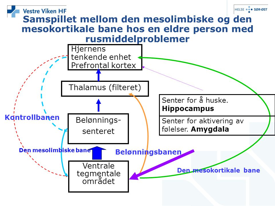Samspillet mellom den mesolimbiske og den mesokortikale bane hos en eldre person med rusmiddelproblemer