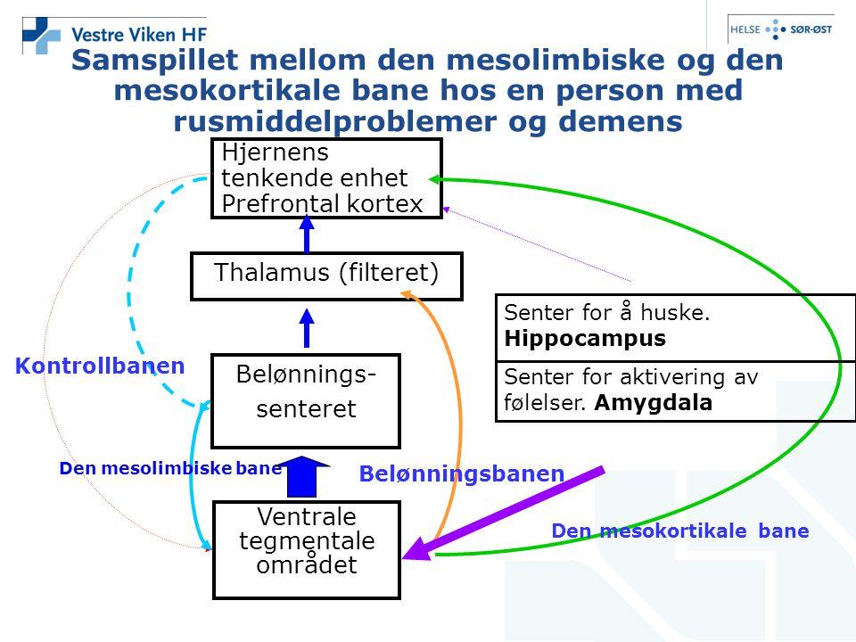 Samspillet mellom den mesolimbiske og den mesokortikale bane hos en person med rusmiddelproblemer og demens